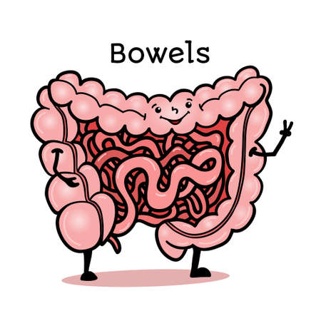bowels: Cute and funny human guts, bowels, intestines character, cartoon vector illustration isolated on white background. Healthy smiling guts, bowels, intestines character with arms and legs