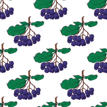 Hand-drawn seamless pattern with hanging bunches of chokeberry, black rowan berries, sketch style vector illustration on white background. Illustration