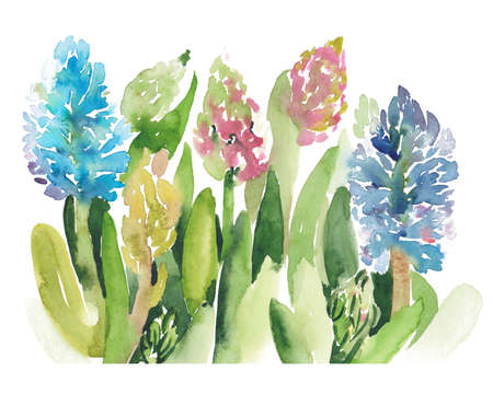 Hand painted sketch of pink and blue hyacinth flowers growing in the garden, watercolor illustration on white background. Watercolor sketch illustration of various hyacinth flowers on white background