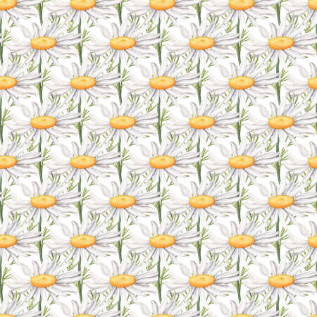 Seamless pattern with big camomile flowers repeated at regular intervals, watercolour raster illustration on white background. Seamless watercolor pattern with daisy, camomile flowers
