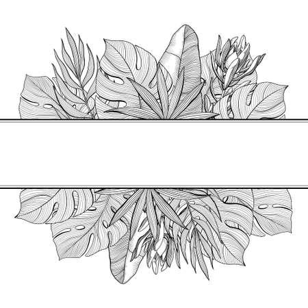 Banner con bordi superiore e inferiore di tropicale, foglie di palma giungla, illustrazione vettoriale disegnato a mano isolato su priorità bassa bianca. Banner con foglie tropicali, giungla, cornice bianca e nera disegnata a mano