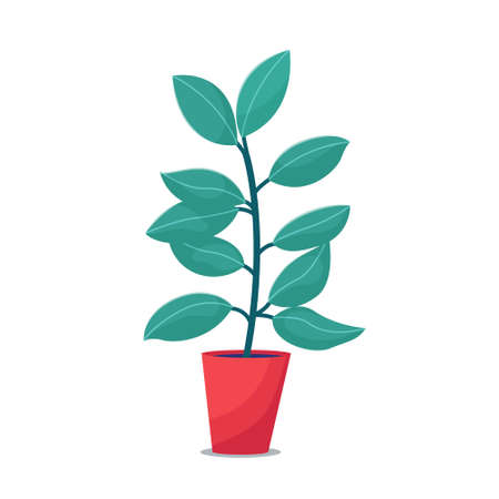 Ficus, rubber plant houseplant in red flowerpot, flat style vector illustration isolated on white background. Single focus house plant in big pot