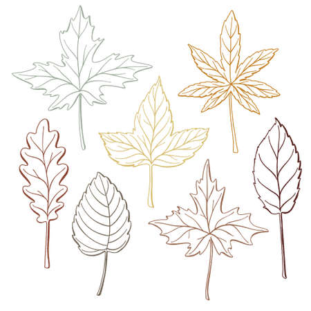 Set of hand drawn fall leaves, outlines
