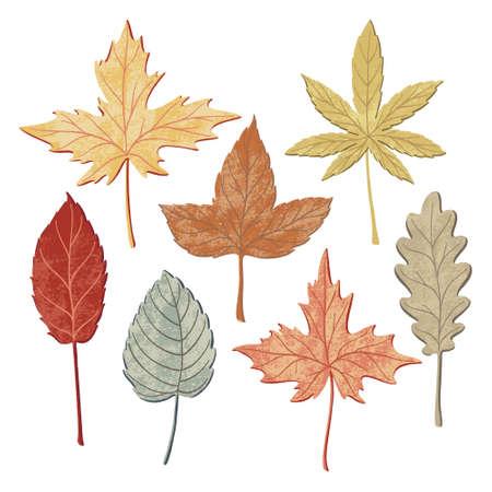 Set of hand drawn fall leaves, autumn symbols