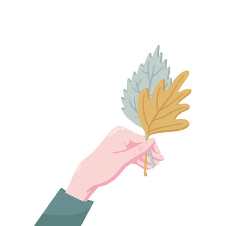 Side view flat cartoon style vector illustration of human hand holding two fall, autumn leaves of birch and maple isolated on white background. Female hand holding two fall, autumn leaves