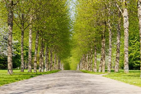 Un callejón de árboles verdes durante la primavera.