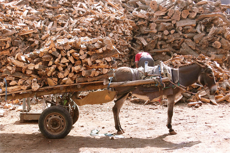 ineffective: Donkey with a carriage full of wooden chunks. Stock Photo