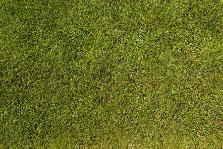 Perfectly green natural soccer turf photographed from directly above. photo