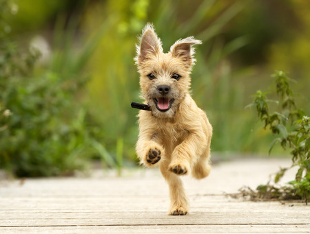 dog running outdoors on a sunny summer day.
