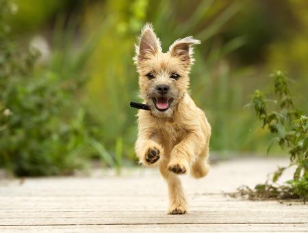 in action: perro corriendo al aire libre en un día soleado de verano. Foto de archivo