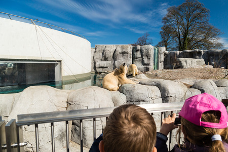 zoological: Two kids looking at and photographing polar bears in zoological garden. Stock Photo