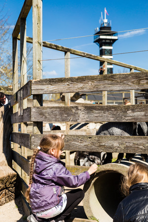 zoological: Girl feeding goat in zoological garden on a sunny spring day.