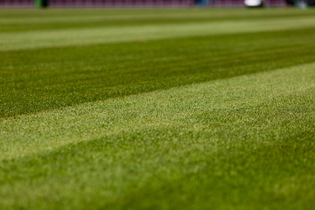 soccer pitch: Perfect green soccer pitch ready for the upcoming soccer season. Stock Photo