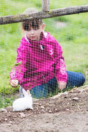 scandinavian girl: Young scandinavian girl feeding rabbit with grass in enclosure on farm. Stock Photo