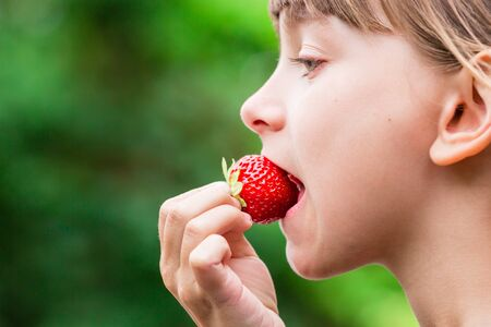 summer fruits: Close-up of young scandinavian child holding and eating fresh red strawberry fruit outdoors on green blurred background.