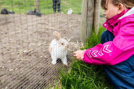 enclosure: Kids feeding young rabbit with green grass in outdoors enclosure on farm with green grass.