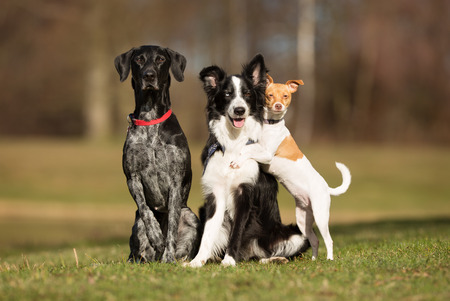Three dogs without leash outdoors in the nature on a sunny day.