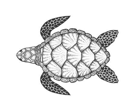 Zeeschildpad in lijnstijl. Hand getrokken vectorillustratie. Bovenaanzicht. Ontwerp voor kleurboek. Set oceaanelementen