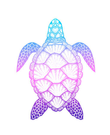 Sea turtle in line art style. Hand drawn vector illustration isolated on white background. Top view. Design for coloring book Stock Photo