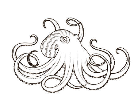 Vector illustration of octopus line art style. Design for t-shirt, posters. Sketch