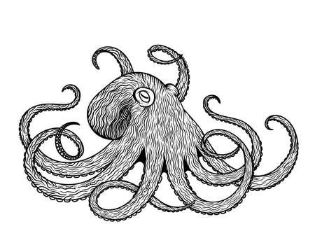 Vector illustration of octopus line art style. Design for t-shirt, posters. Sketch Illustration