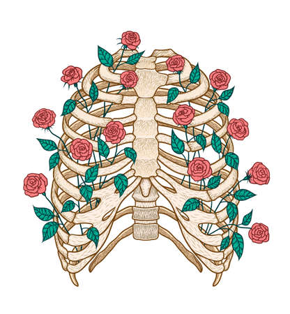 Illustration of human rib cage with roses. Line art style. Boho vector realistic 向量圖像