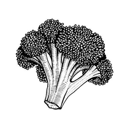Hand drawn vector illustration of cauliflower doodle style