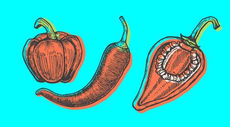 Hand drawn vector illustration of peppers set sketch style. Doodle vegetable elements Illustration