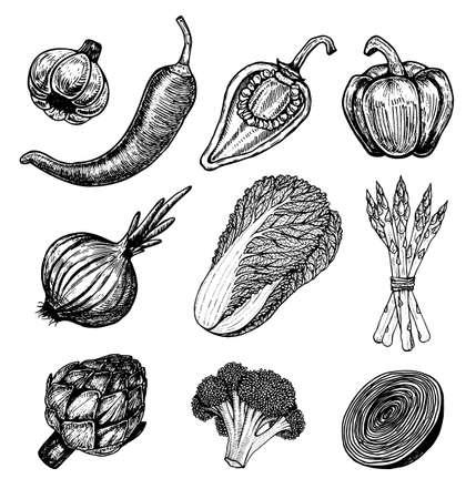 Set Hand gezeichnete Elemente mit Sketch Stil Gemüse. Verschiedene Paprika Frischer kohl Artischocken und Spargel. Blumenkohl, Zwiebeln Standard-Bild - 75067499