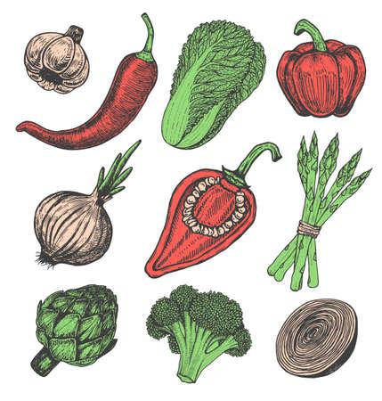 Set Hand gezeichnete Elemente mit Sketch Stil Gemüse. Verschiedene Paprika Frischer kohl Artischocken und Spargel. Blumenkohl, Zwiebeln Standard-Bild - 75017878