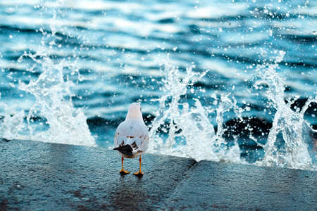 Gull sits on coast. Water drops in the air. Sea wave splashes Foto de archivo