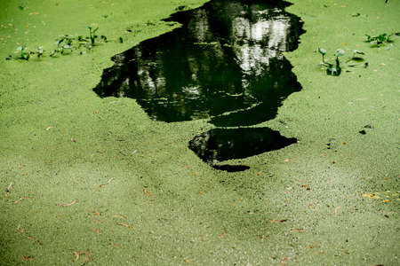 waterweed: An Image of Waterweed