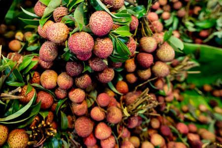 litchi: Fresh lychees fruit (Litchi chinensis)