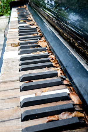 chorale: old decaying organ left to rot in field,Old moldy piano