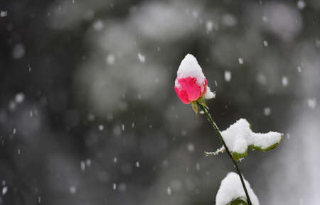 heavy snow: Heavy snow in later autumn early winter.