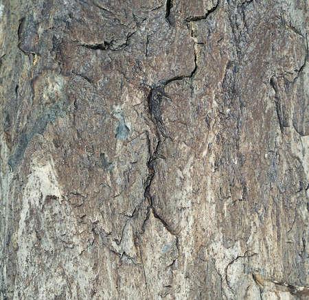 waterless: Volcanic stone surface with dark cracks. Texture, daylight. Stock Photo