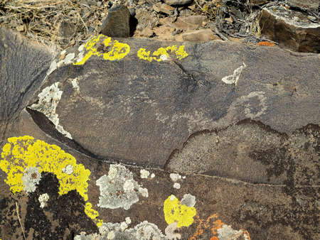 bad condition: Stone with aincient petroglyphs and fungus on a surface. Day light, bad condition of drawing, sacred place in Chuya steppe.