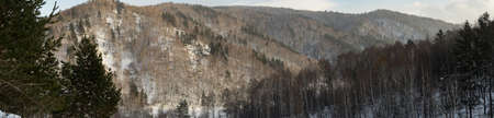 Mountain slops covered with forest. Roerich places, Altai mountains. Winter, afternoon. Time after snowstorm.