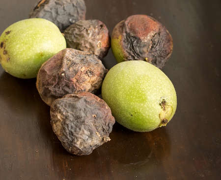 Six nuts of Juglans regia on the wood surface. Some of them ripe, two is green color. Stock Photo