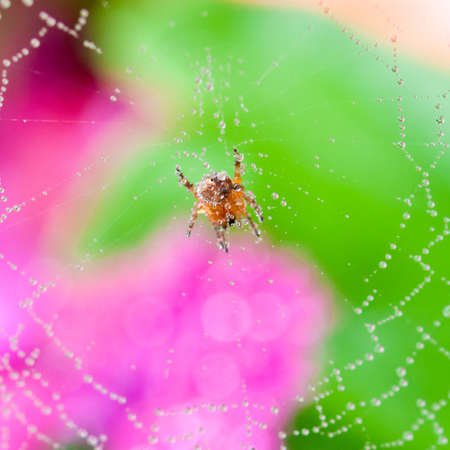 A spider sits inside its colourful web domain. photo