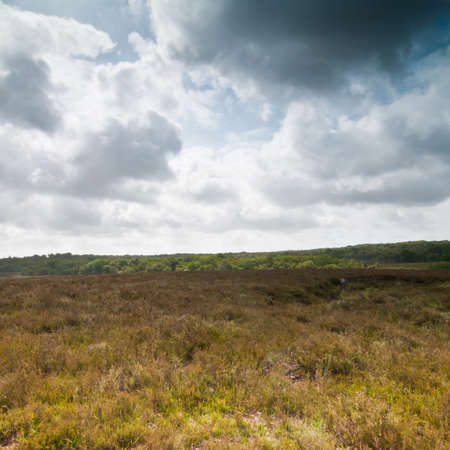 Looking out across heathland in the New Forest national park in Hampshire, UK.