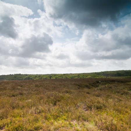hampshire: Mirando a trav�s de p�ramos en el Parque Nacional New Forest, en Hampshire, Reino Unido.