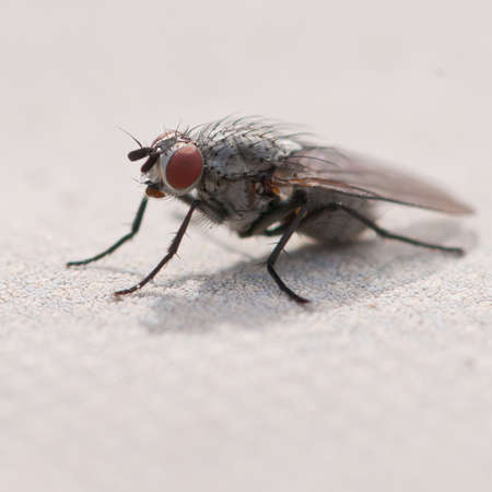 A particularly hairy fly sits in the sunshine. Stock Photo - 10527477