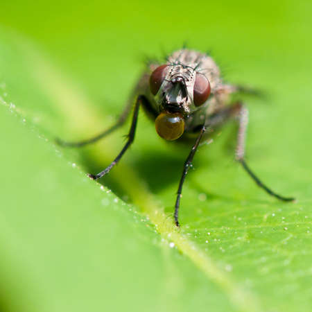 A fly sits on a leaf blowing bubbles. Stock Photo - 10527483