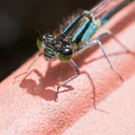A close-up of the face of a damselfly. Stock Photo - 10572174