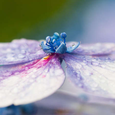 A macro shot of the central details of a hydrangea flower.