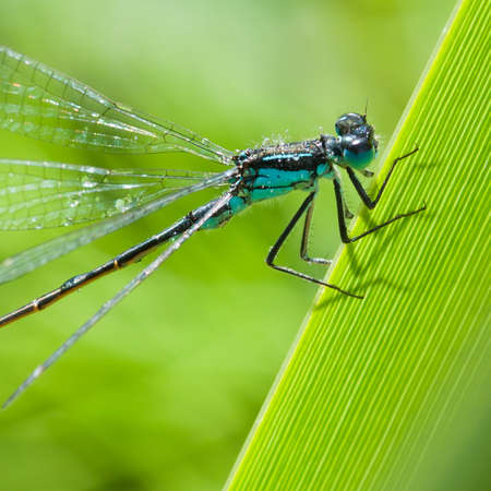 A close-up of a damselfly, shot in profile.