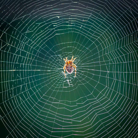 arachnid: An arachnid sitting in an empty web. Stock Photo
