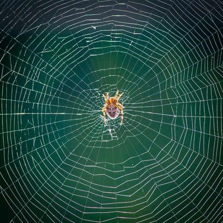 spider web: An arachnid sitting in an empty web. Stock Photo