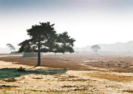 exbury: A view of a tree on a misty morning in the New Forest national park, Hampshire, UK. Stock Photo